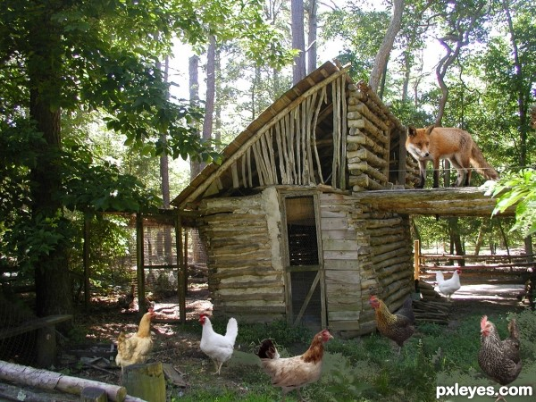 Fox-guarding-the-hen-house