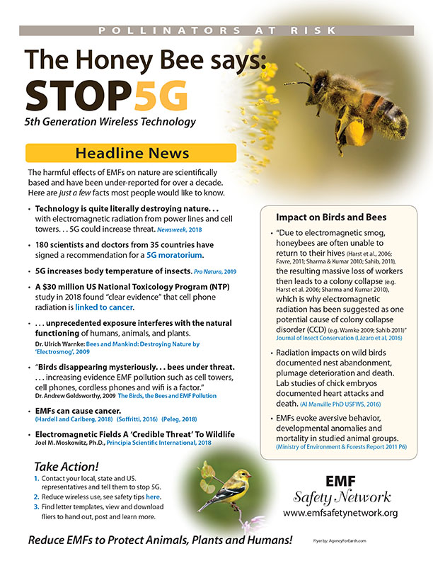 Pollinators at Risk: Take Action